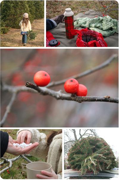 Treefarm08