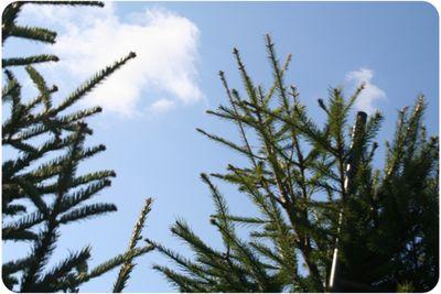 Tree8306