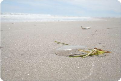 Beach6800