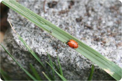 Bugs9511