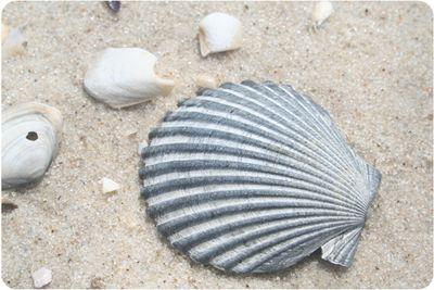 Shells0607