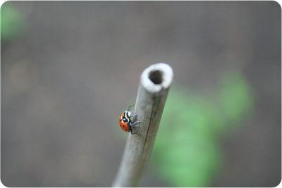 Bugs9534