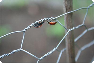 Bugs9527