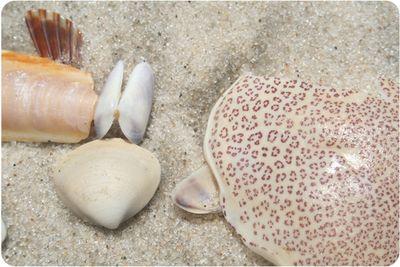 Shells0598