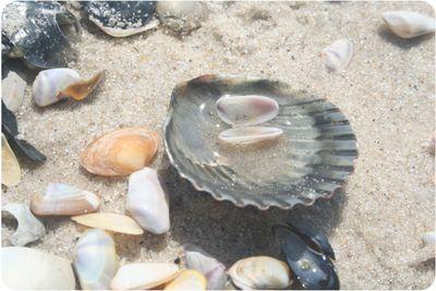 Shells0600