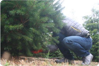 Treefarm1140