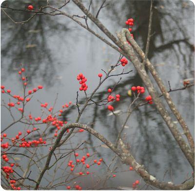 Treefarm1191