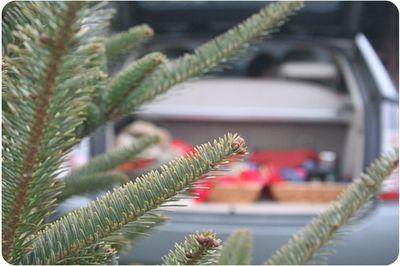 Treefarm1137