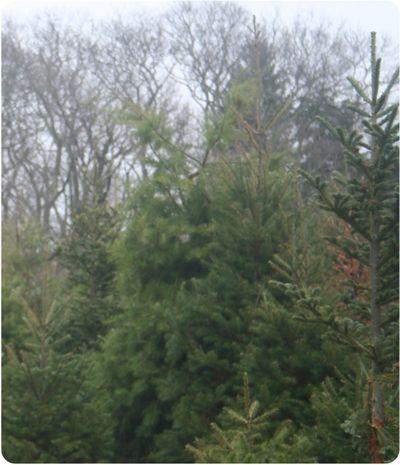 Treefarm1146