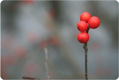 Treefarm1190