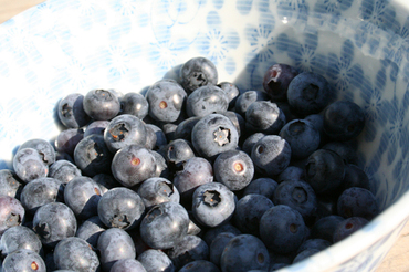 78_blueberry3