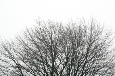 Cloudy2_1