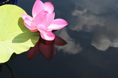 Lotus_2006